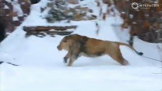 Лучшие видео недели о животных от Рейтер, 03.02.19