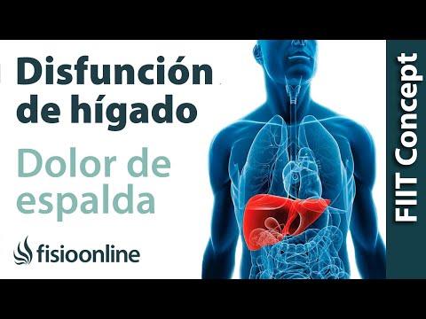 ¿Cómo El Hígado Puede Afectar a Tu Espalda?