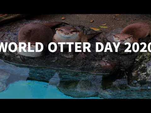 世界カワウソの日(日本語ver)-World Otter Day 2020
