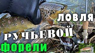 Ловля ручьевой форели. Рыбалка в Ленинградской области. Июль 2021.