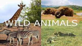 Wild Animals, Tiger, Rhino, Deer, Elephant, Giraffe