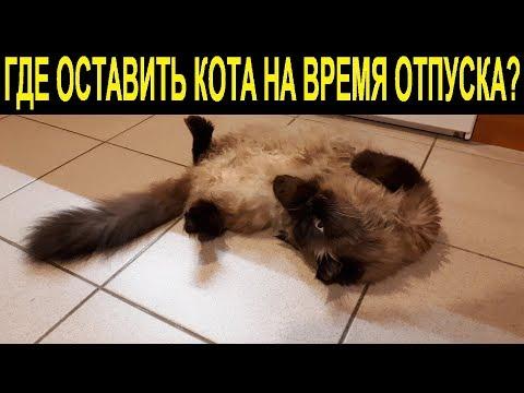 Где оставить кота на время отпуска   Где оставить кошку на время отпуска