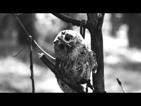 Hombre Gris - Vakero (Video)