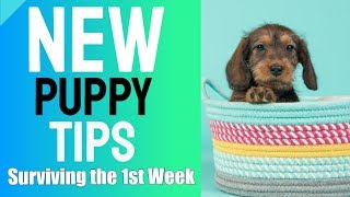 New Puppy Tips - Surviving the First Week