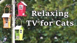 Relaxing TV for Cats : The Garden Bird Feeders