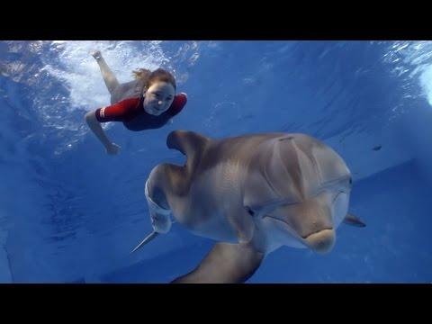 Dolphin Tale 2 TV Spot 1