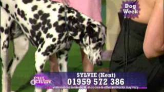 P!nk dogs need a home Paul O'Grady Show