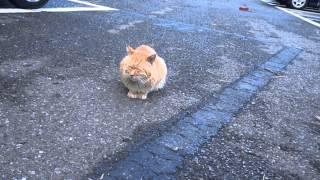 人面猫in江ノ島
