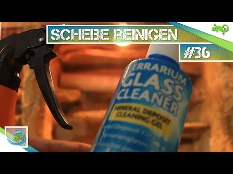 SCHEIBEN REINIGEN - WASSER vs. CHEMIE |#36|GeckoTagebuch|[FHD]