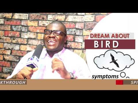 DREAM ABOUT BIRD - EvangelistJoshua.com