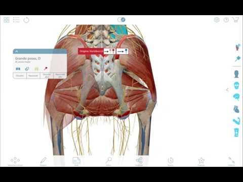 Per cui il medico chiede per il mal di schiena