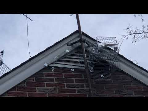 Gable Vent Destroyed by Raccoons in East Brunswick, NJ