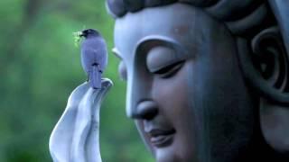 Great Compassion Mantra / Ani Choying Drolma