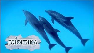 Бионика. Дельфины