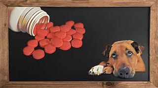 Canine arthritis medications