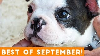 Ultimate Animal Reactions & Bloopers of September  2018 | Funny Pet Videos