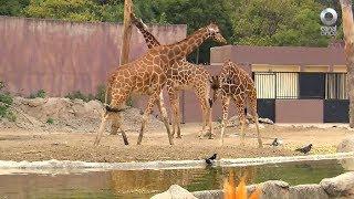 D Todo - Zoológico de San Juan de Aragón