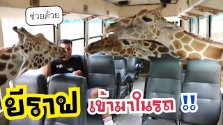 เที่ยวสวนสัตว์ เจอยีราฟบุกเข้ามาถึงในรถ !!! | CLASSIC NU