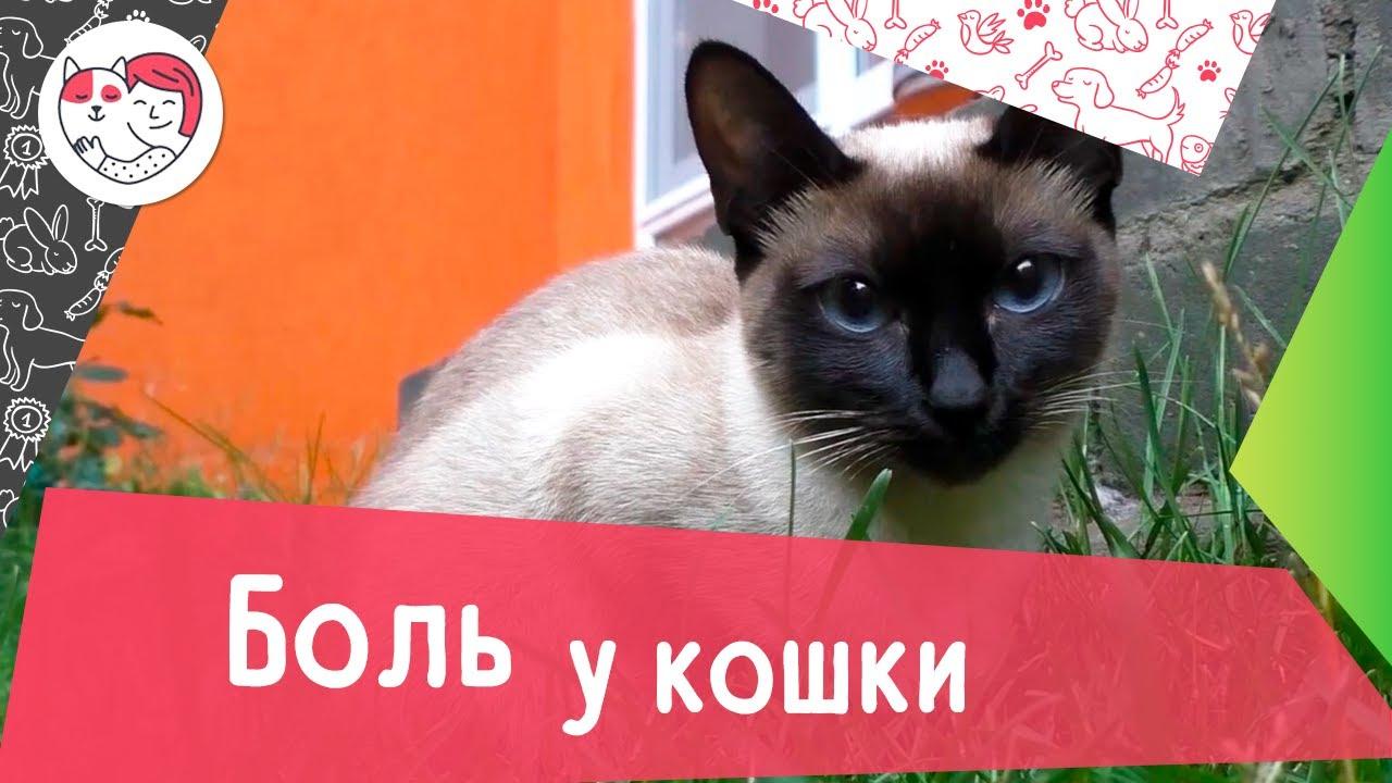 Как определить, что кошка испытывает боль: 6 признаков