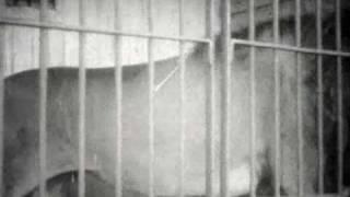 Rodoljub Malencic - Rodac zurnal Gostovanje cirkusa Kludski u Novom Sadu 1929