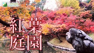 美しく色づいた見頃の紅葉庭園を散策!おすすめ絶景ドローン映像4K九州ランキングにあまり入らない穴場とも言える屈指の名所