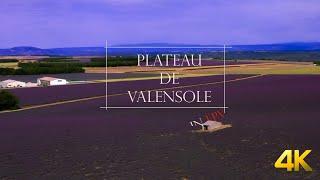 Plateau de Valensole en FPV (4K)