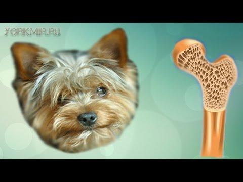Остеопороз у собак | Причины | Симптомы | Лечение.