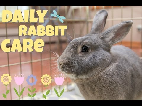 Download DAILY RABBIT CARE 🌻 Mp4 HD Video and MP3