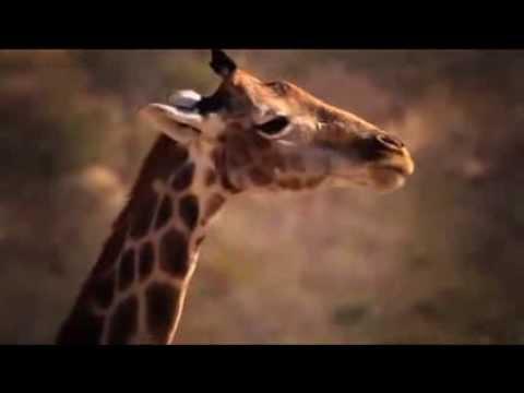 Ongava Wildlife (+- 1 minute long)