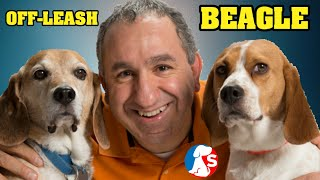 Beagle Training | How To Off-Leash Train Using Simple Solutions and method