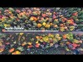 Jason Derulo- Colors (Lyrics)