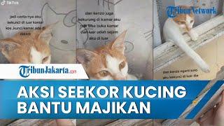 Viral Video Aksi Kucing Bantu Majikan Buka Jendela karena Terkunci dari Luar Kamar