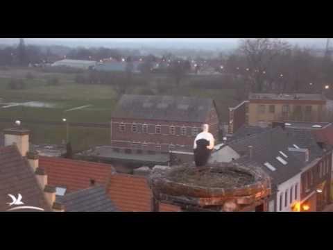 Stork Intruders - 14.03.2017