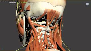 Headaches - Mechanical and Nutritional Causes of Headache Pain - Video Youtube