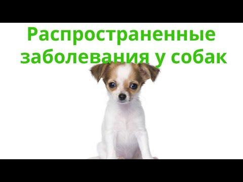 Заболевания Собак & Распространенные Заболевания Собак. Ветклиника Био-Вет