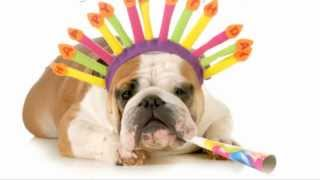 Happy Birthday -  Funny Dogs -  Funny Videos -  Funny Quotes