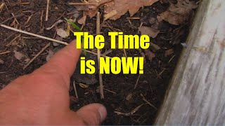 When to Sow Fall Crops