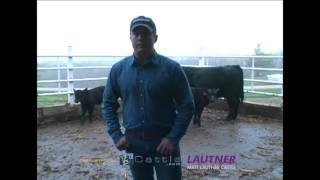 Selecting Prospect Calves