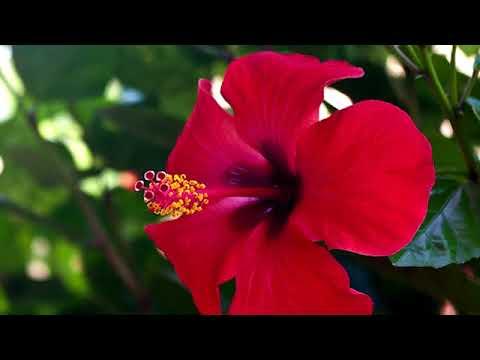 Medicine da parassiti di sangue-sicking