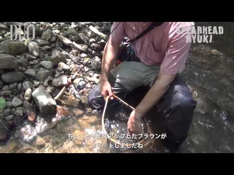 Vobler DUO Ryuki 70S Awabi 7cm 9g DSH4046 Red Gold AM S