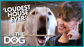Non-stop Dog Barking is Making Owner DEAF   It's Me or the Dog