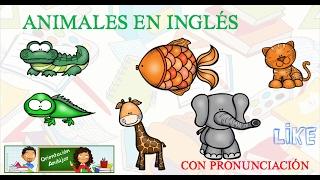 Animales en ingles con pronunciación Aprendemos el nombre de muchos animales en inglés