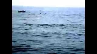 preview picture of video 'Delfines en la playa El Silencio en Punta Hermosa, Perú'