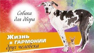 Собаки крупных и средних размеров. Двор дуплекса в жилом районе «Гармония»