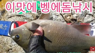 opaleye rock fishing 105