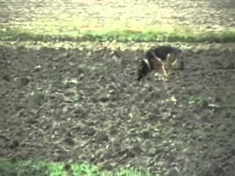immagine di anteprima del video: wusv 2010
