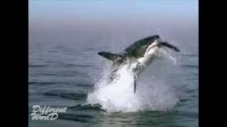 Акула. Интересное видео о животных №3