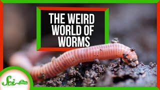 The Wild, Wiggly, Weird World of Worms   Compilation