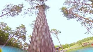 Pine Trees // Fpv Freestyle