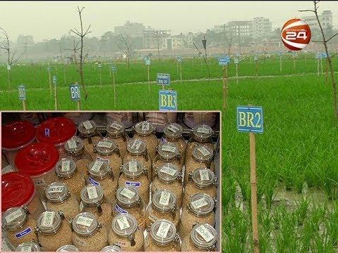 ব্রির জার্মপ্লাজমে সংরক্ষিত আছে দেশি বিদেশী ৯ হাজার ধানের জাত